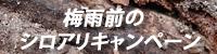 梅雨前のシロアリキャンペーン実施中!!